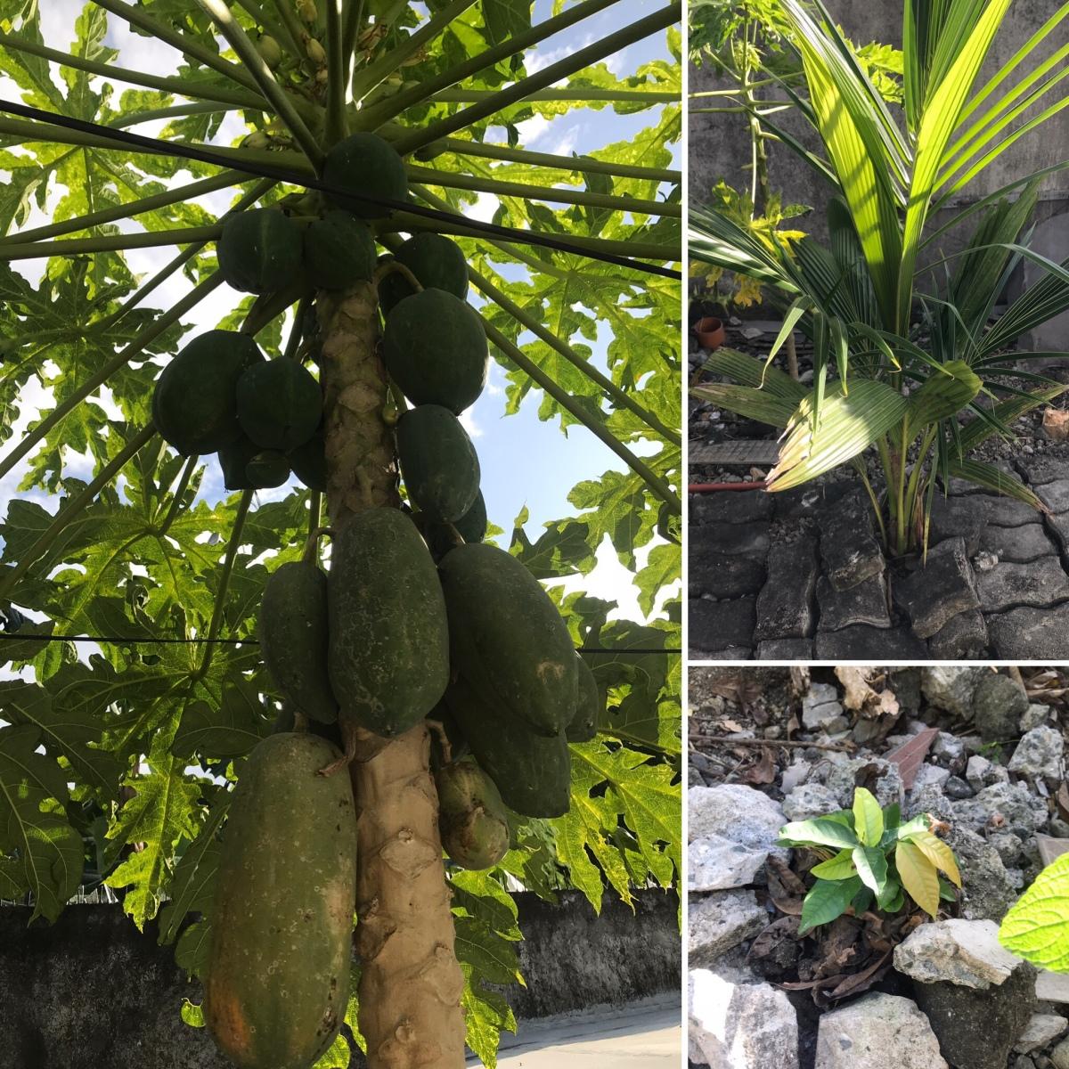 Organic fruits bearing trees