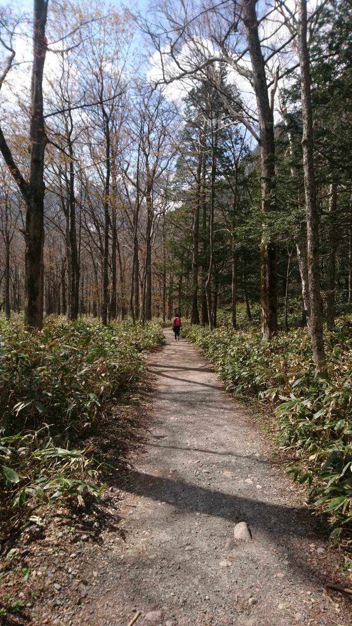 A walk through the woods of Kamikochi
