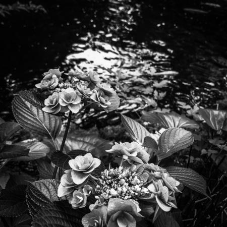 Flowers beside a garden pond, Tokyo