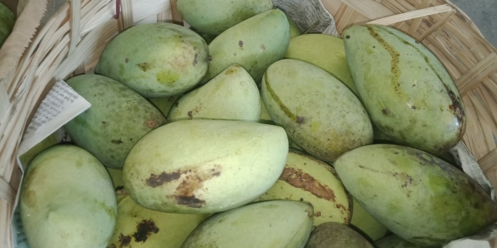 A kaing full of mangoes that my friend harvested