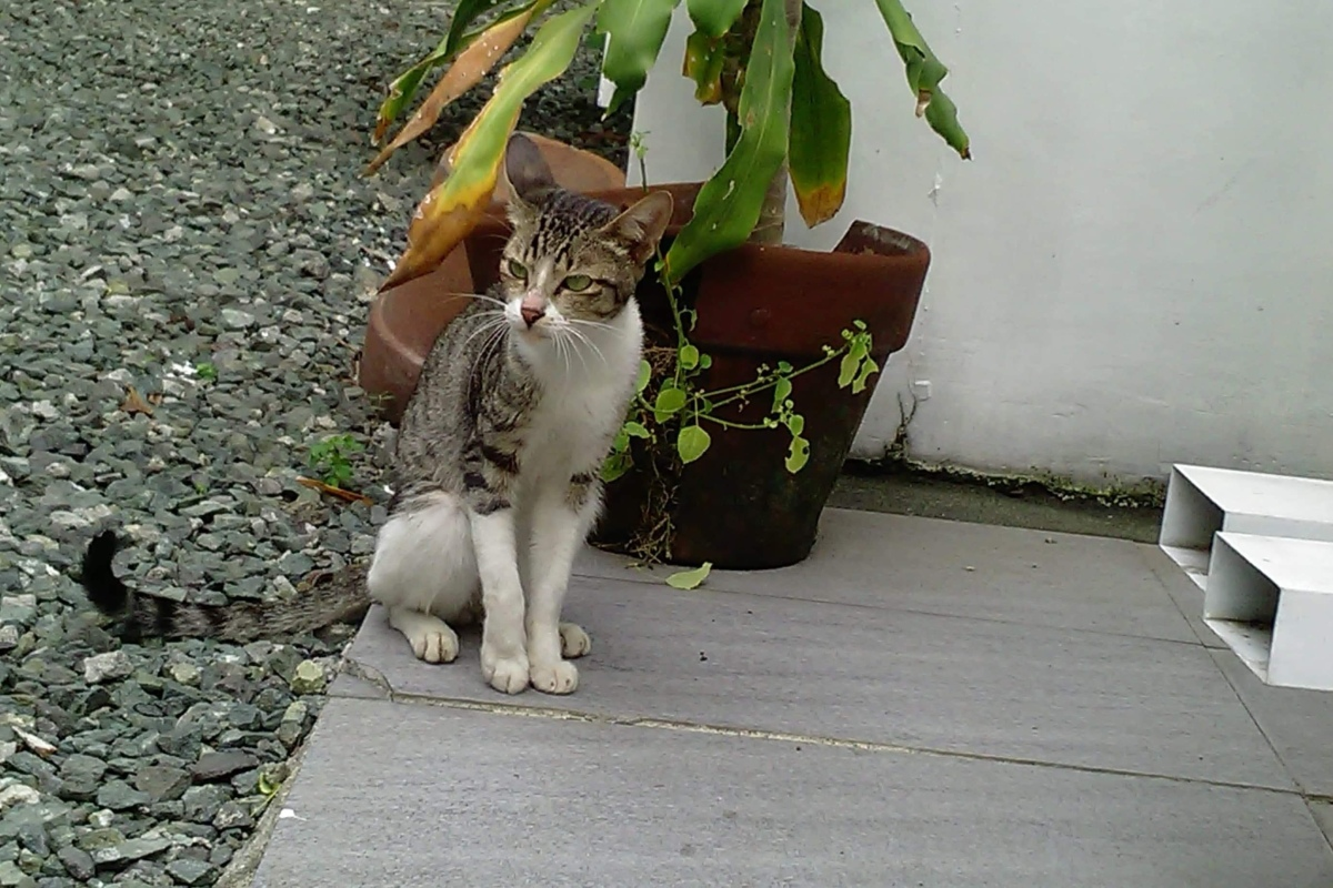 Our regular guest, Meow