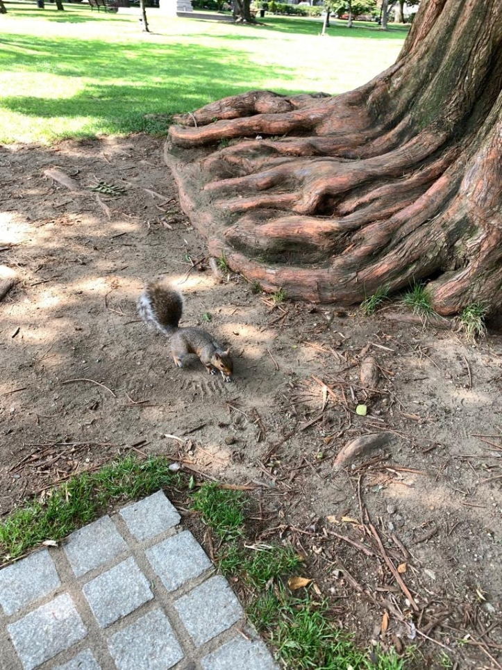 Squirrel at the Boston Public Garden