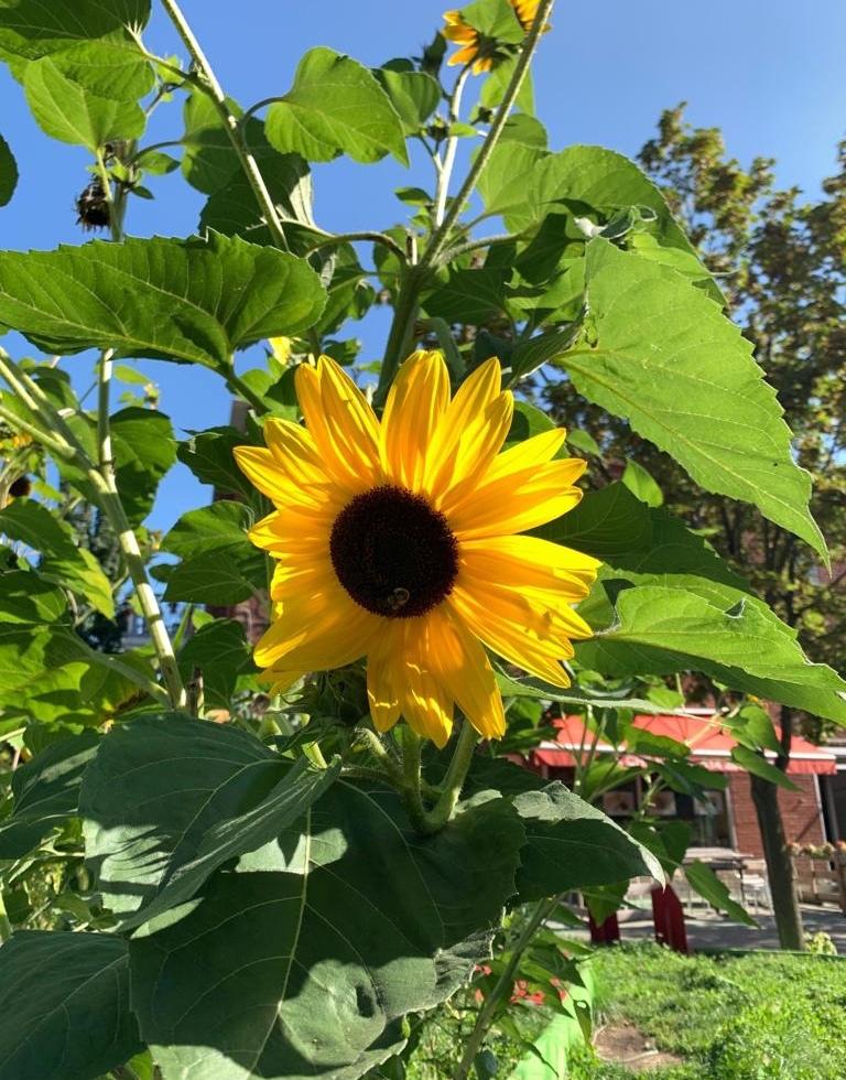 Sunflower that caught my eye
